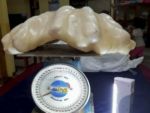 pearl from a giant clam